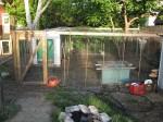 Chicken Coop & Yard
